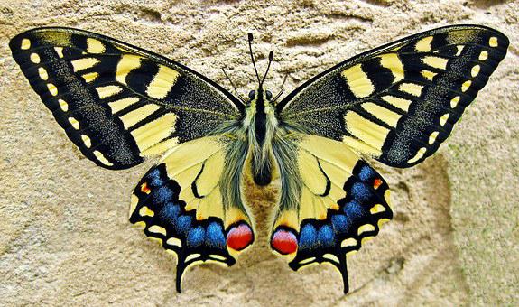 inspirational-story-butterfly